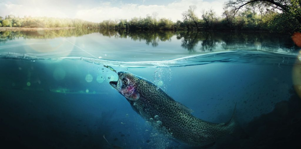 Into Fly Fishing Archive Header