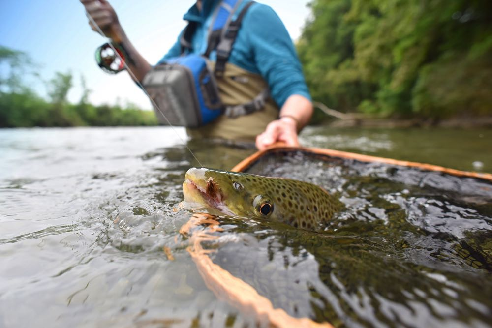 Netting a Fish While Fly Fishing on The River