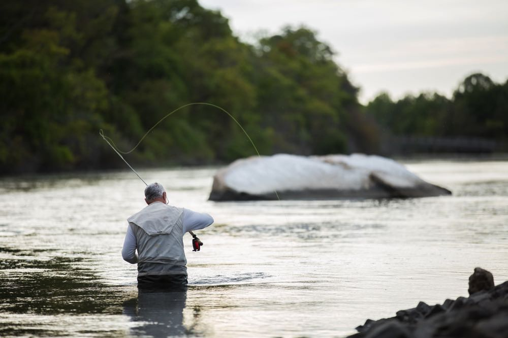 Old Man Fly Fishing In New York On a River Sunken Meadow