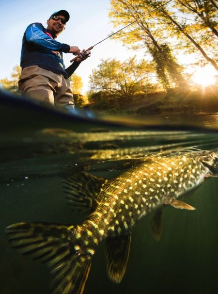 Pike Fish Caught On a Fly