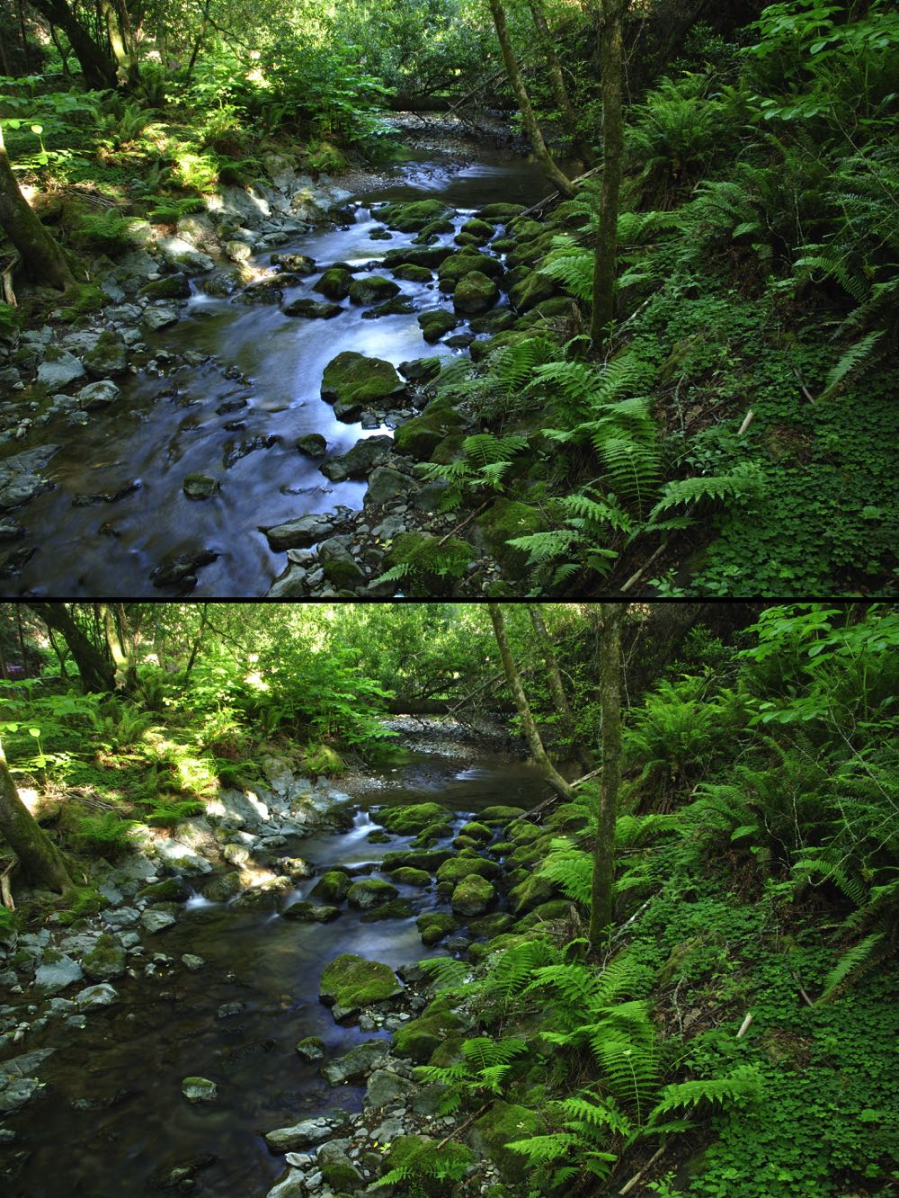 Showing Fly Fishing River Difference Between Polarized lens and non-polarized lens reflection