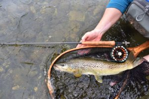 The Best Fly Fishing 3 weight lines