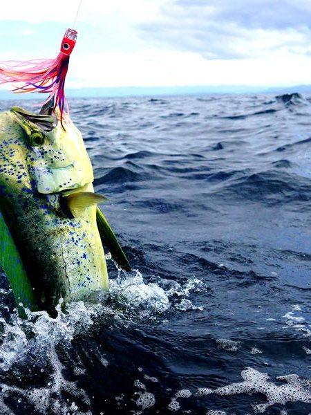 Fly Fishing In Costa Rica For Mahi Mahi Dorado
