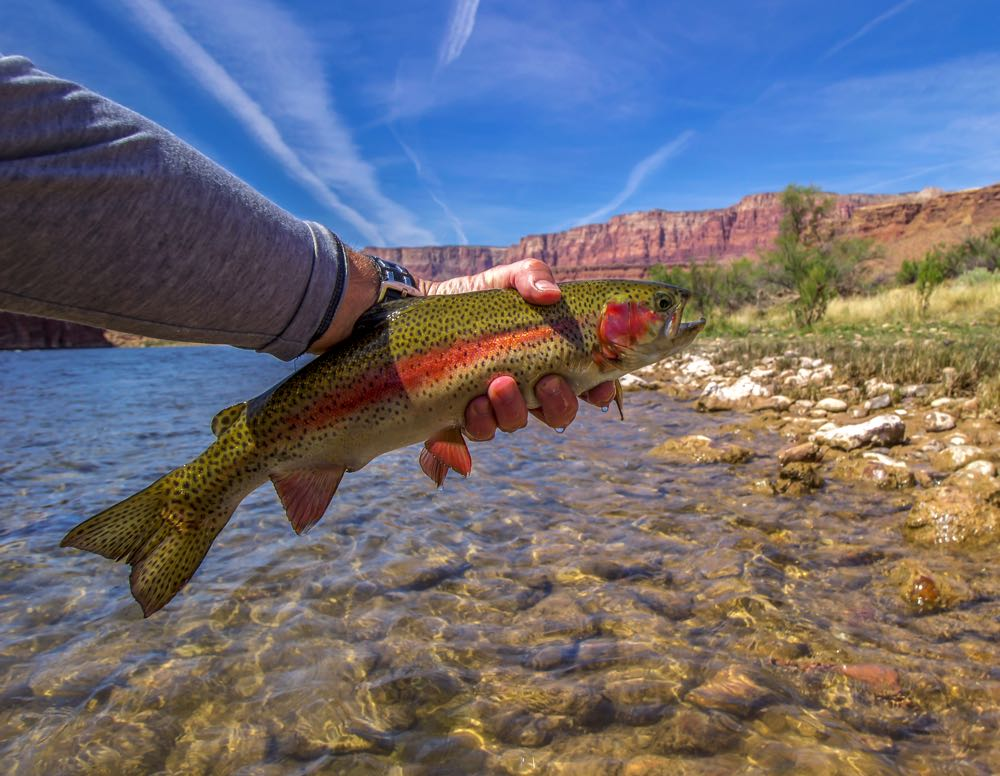 Fly Fishing in Arizona Holding a Trout on The River