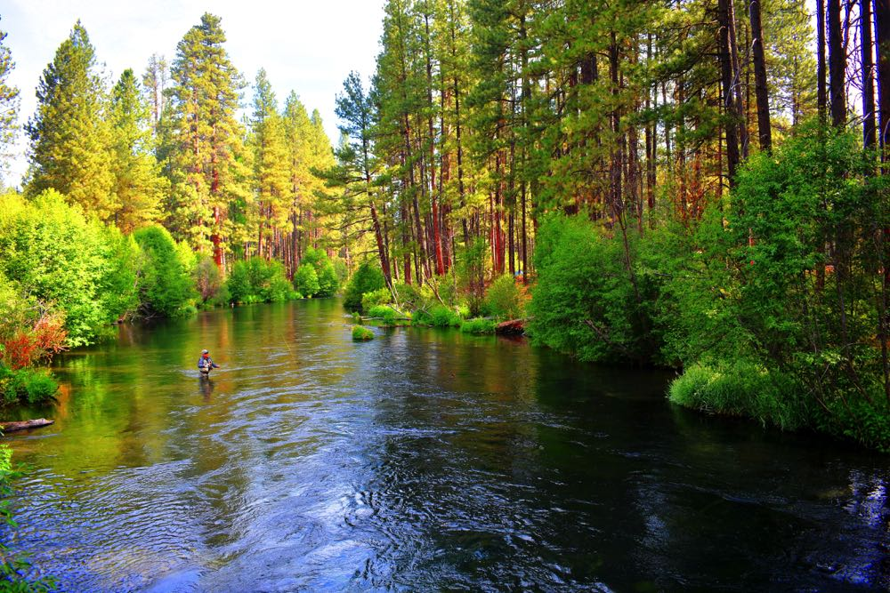 Fly Fishing in Oregon in The Spring