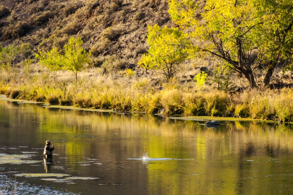 Man Fly Fishing in Oregon on an Eastern River