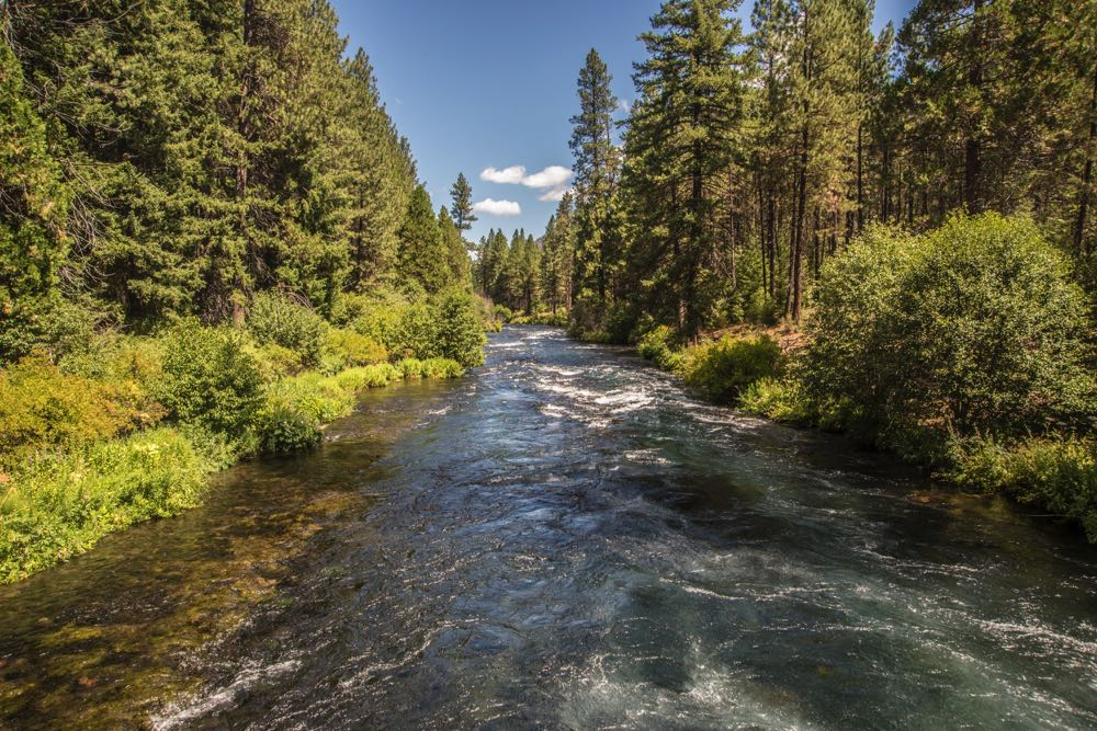 Metolius River Fly Fishing Spot