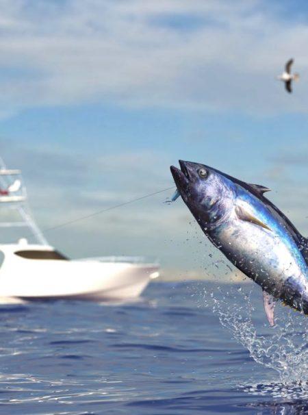 Tuna Fishing Fish Species