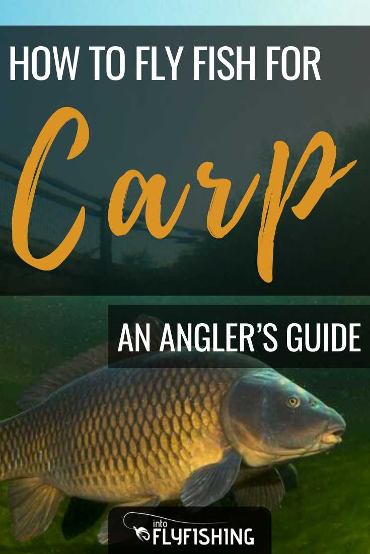 An Angler's Guide On How To Fly Fish For Carp