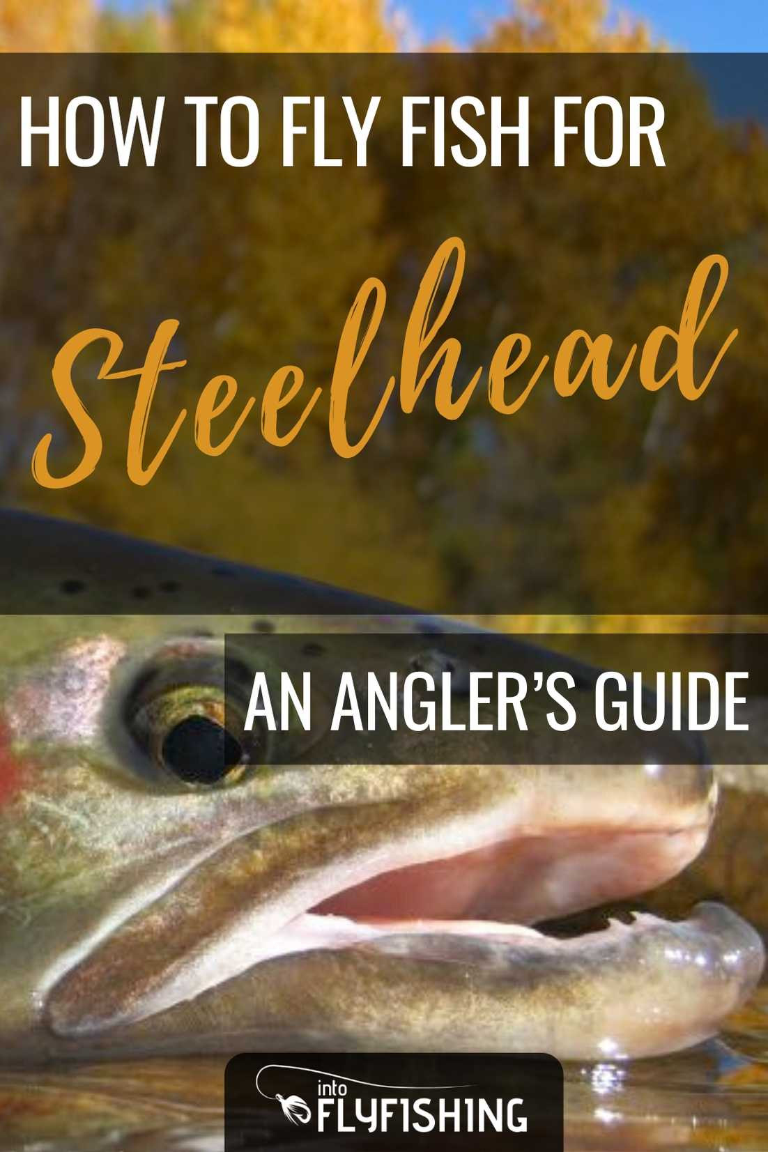 Angler's Guide On How To Fly Fish For Steelhead