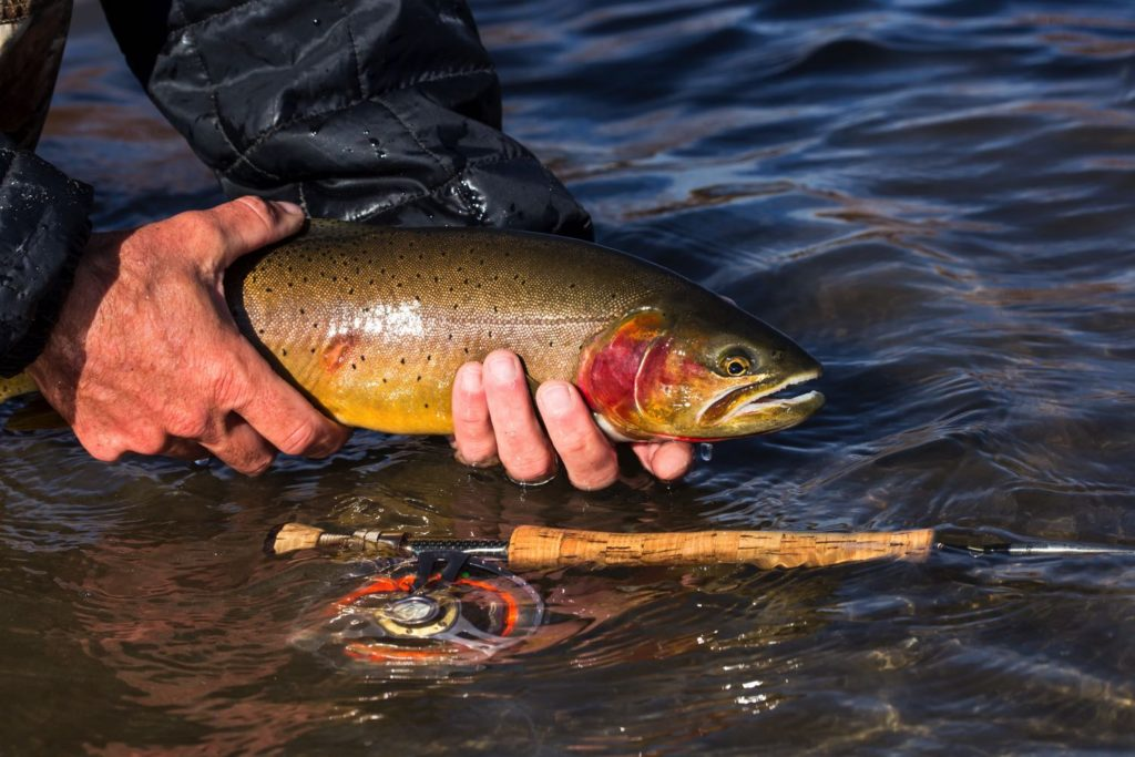 Fly Fishing For Trout with flies