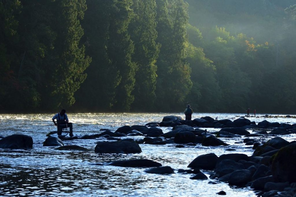 Fly Fishing On The Campbell River in British Columbia