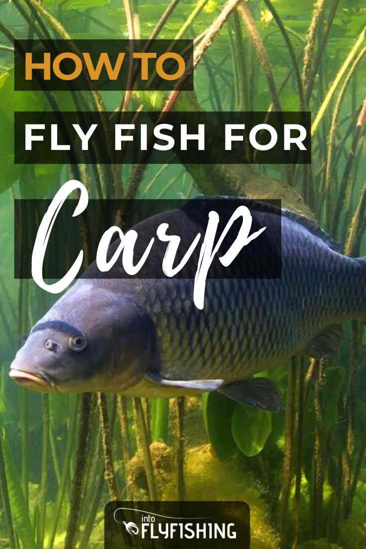 How To Fly Fish For Carp