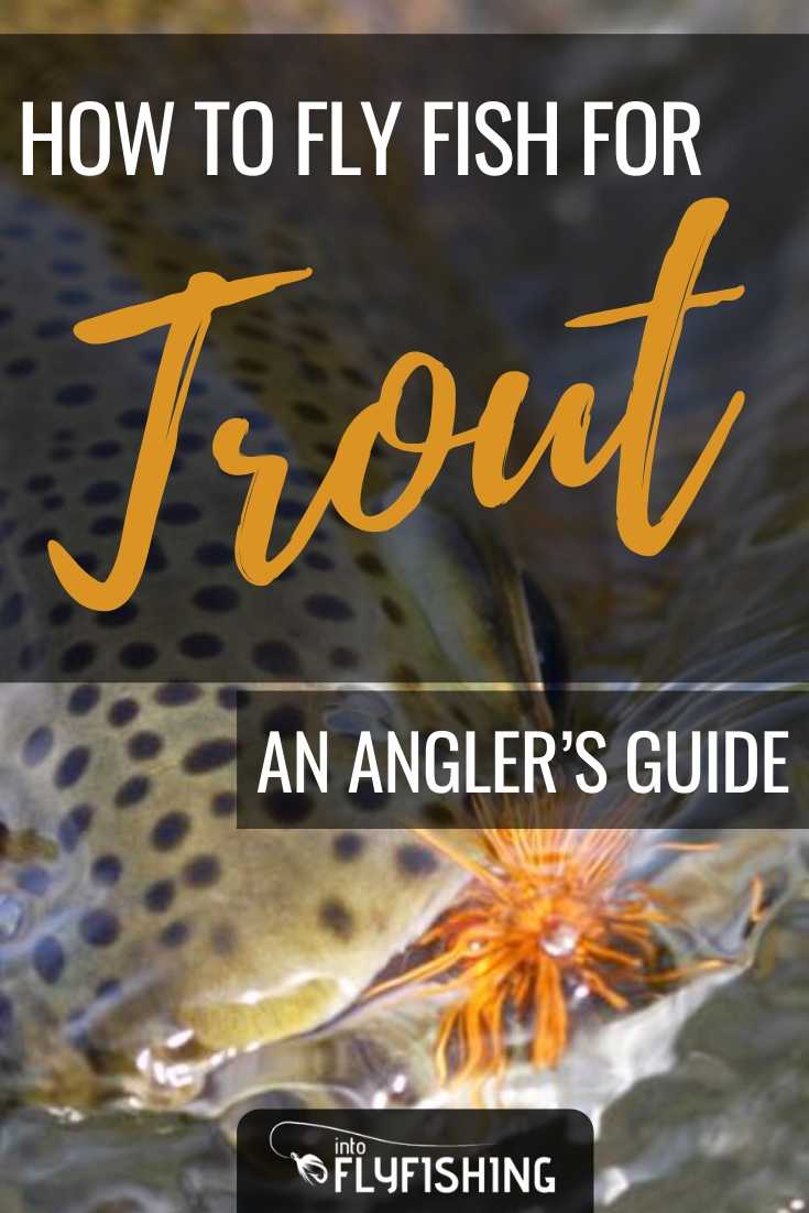 How To Fly Fish For Trout An Angler's Guide
