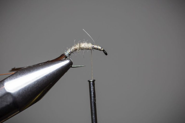 How To Tie a Caddis Fly Nymph Step9_part2