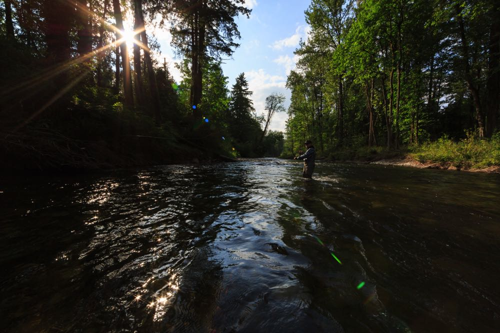 Fly Fishing The Cedar River In Maple Valley, Washington