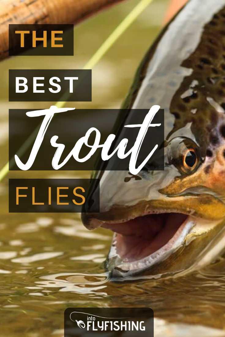 The Best Trout Flies