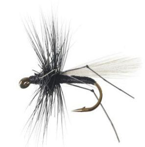 The Hawthorn Fly