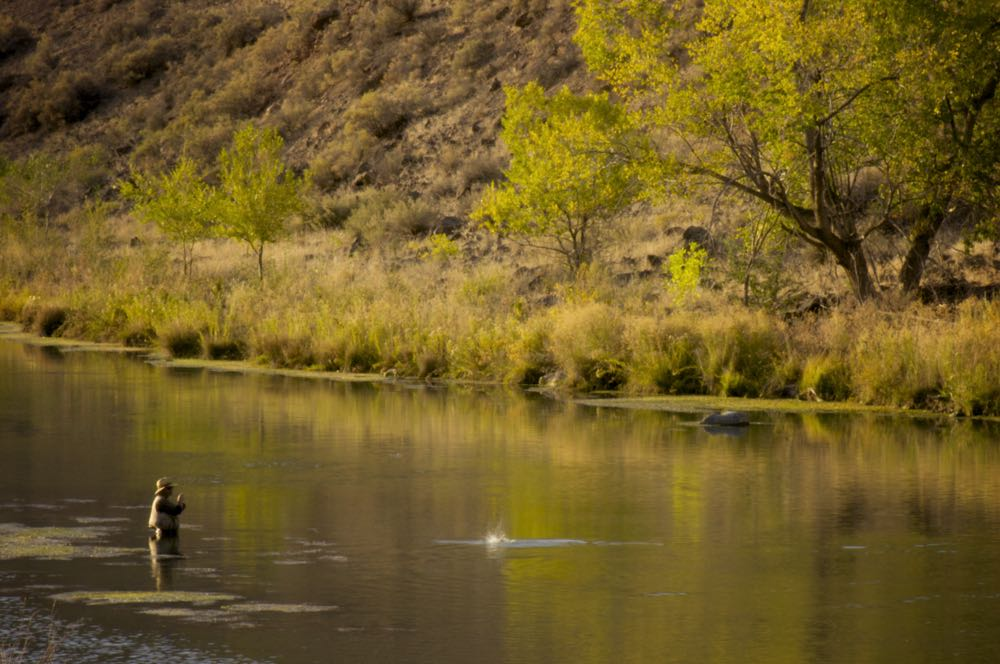 dry fly fishing fish on hooked on river in the fall spring