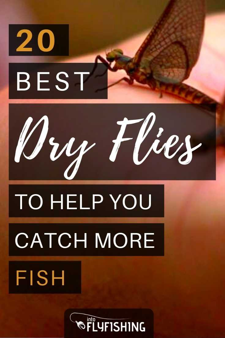 20 Best Dry Flies To Help You Catch More Fish