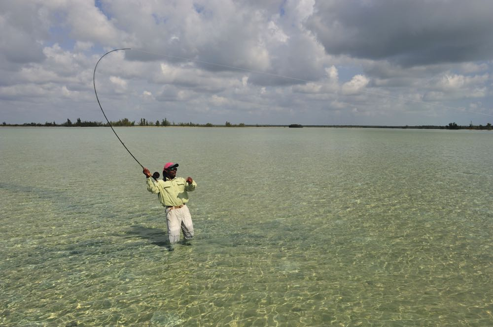 Fly Fishing tarpon in Knee Deep Shallow Water