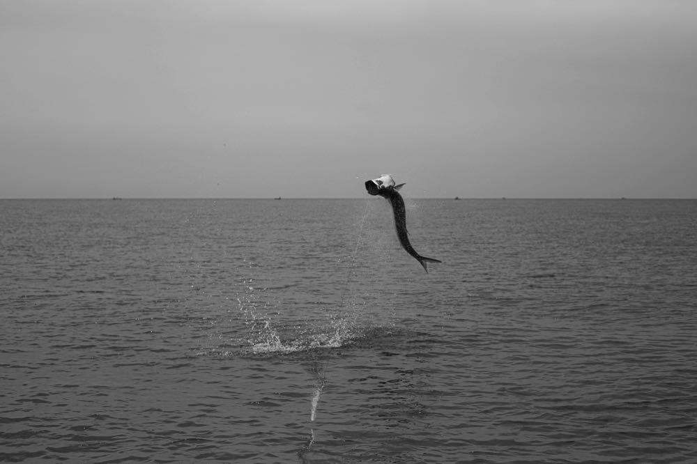 Fly Fishing TarponCosta_Rica_Low_Res-63