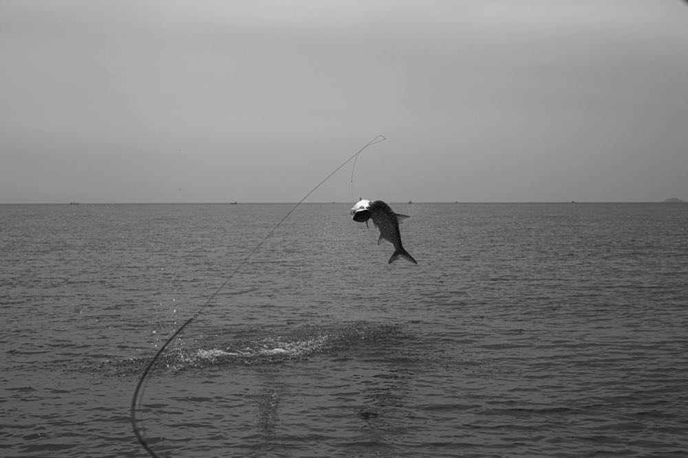 Fly Fishing Tarpon Costa_Rica_Low_Res-64