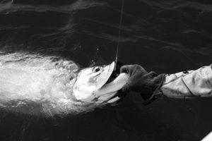Fly Fishing Tarpon Costa_Rica_Low_Res-66