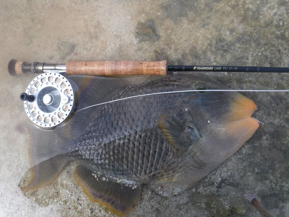 Fly Rod For Fishing Trigger Fish