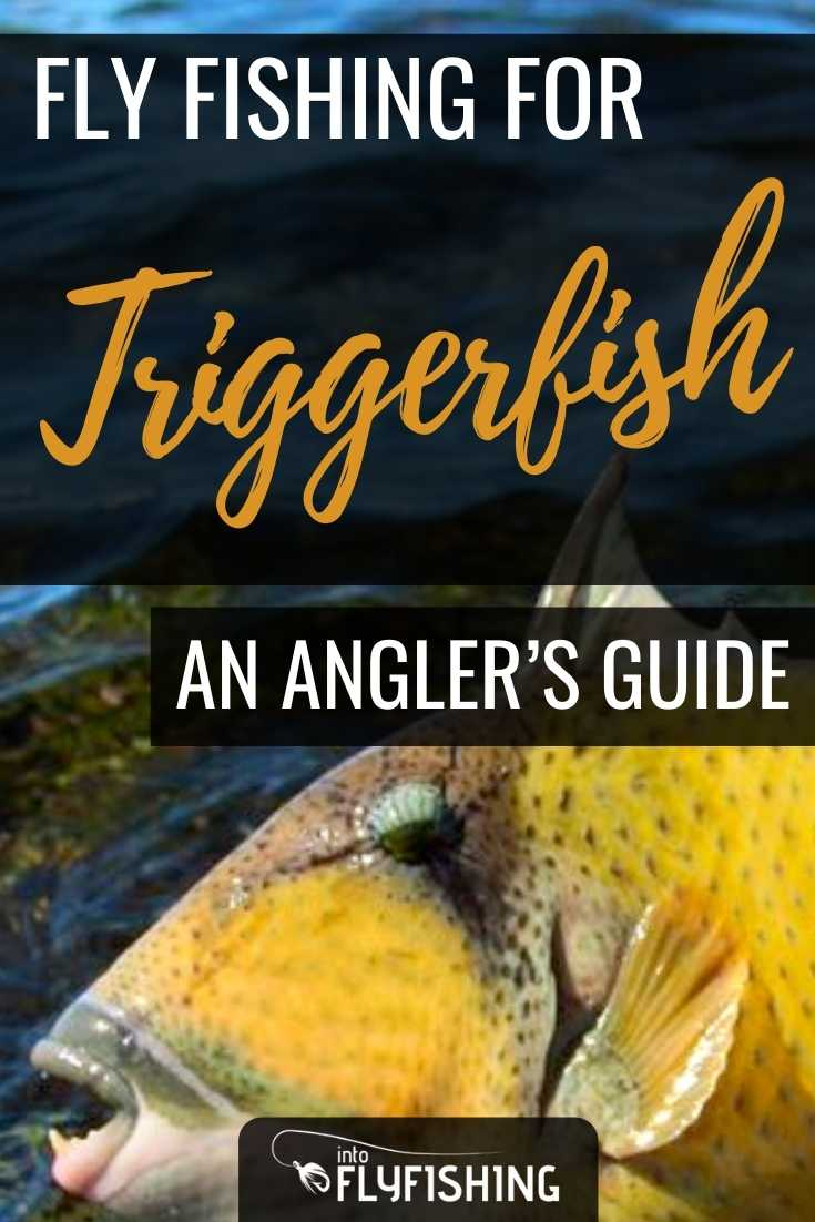 Fly Fishing for Giant Triggerfish: An Angler's Guide