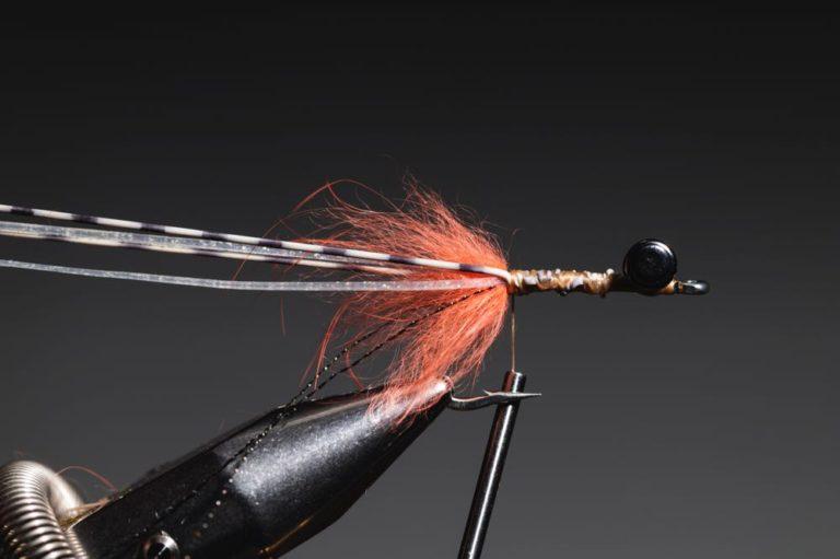 fly tying tutorial - avalon_shrimp_step-11