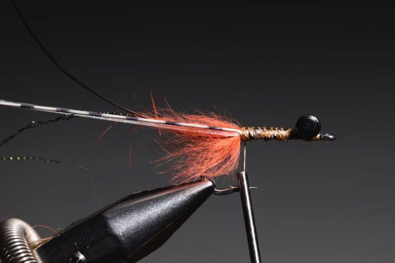 fly tying tutorial - avalon_shrimp_step-12