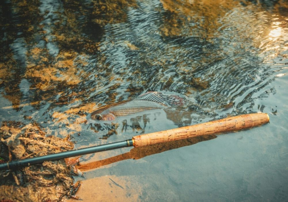 A Tenkara fly rod on the water