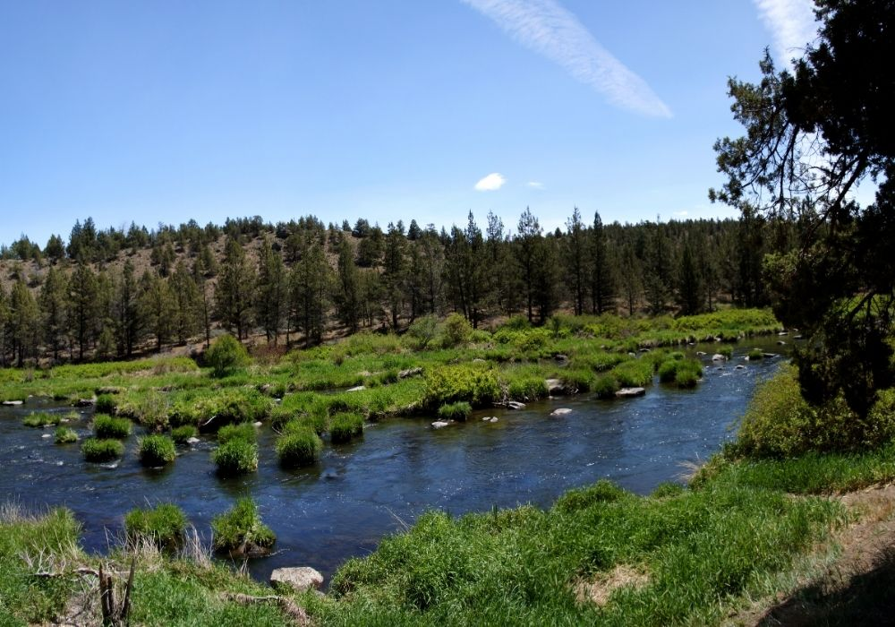 A beautiful Pine Creek on the Yellowstone River.