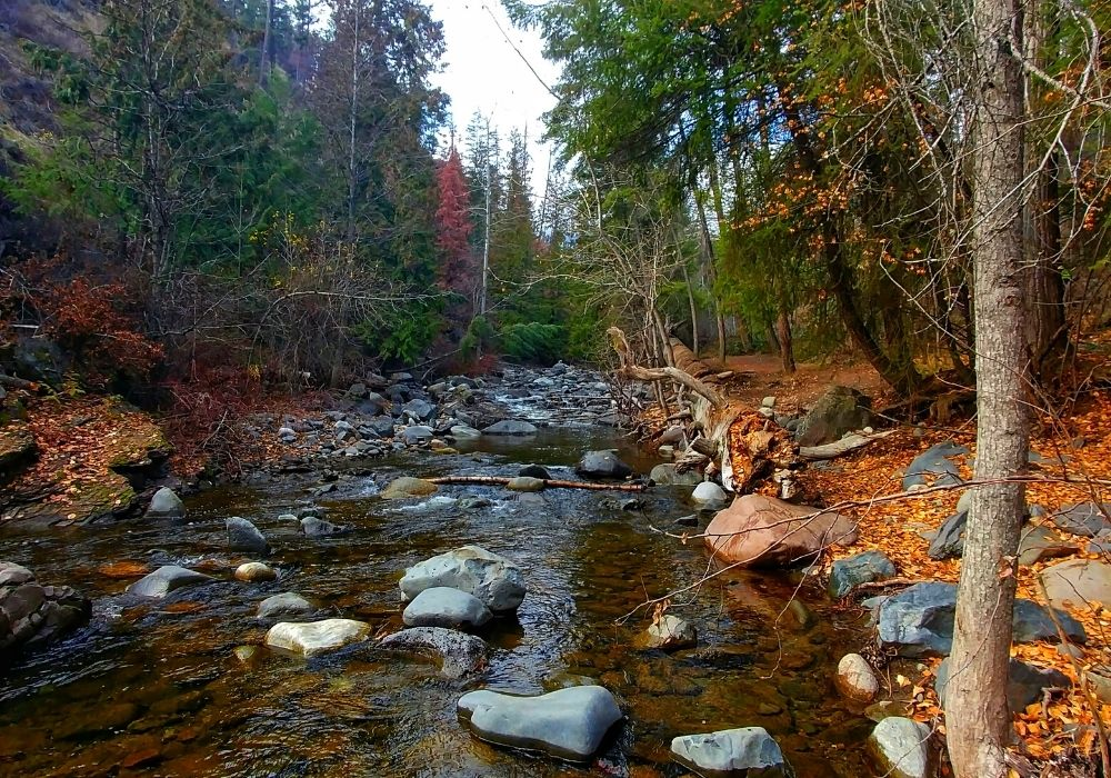 A beautiful small stream at Bear Trap Canyon