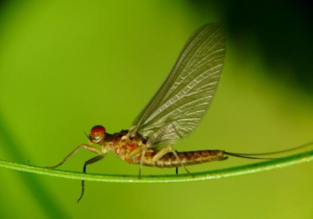 A close-up image of a grasshopper