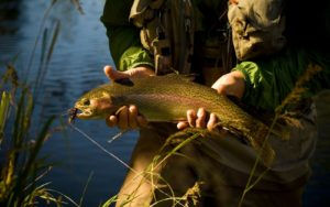 An angler fishing with a dry flies for trout