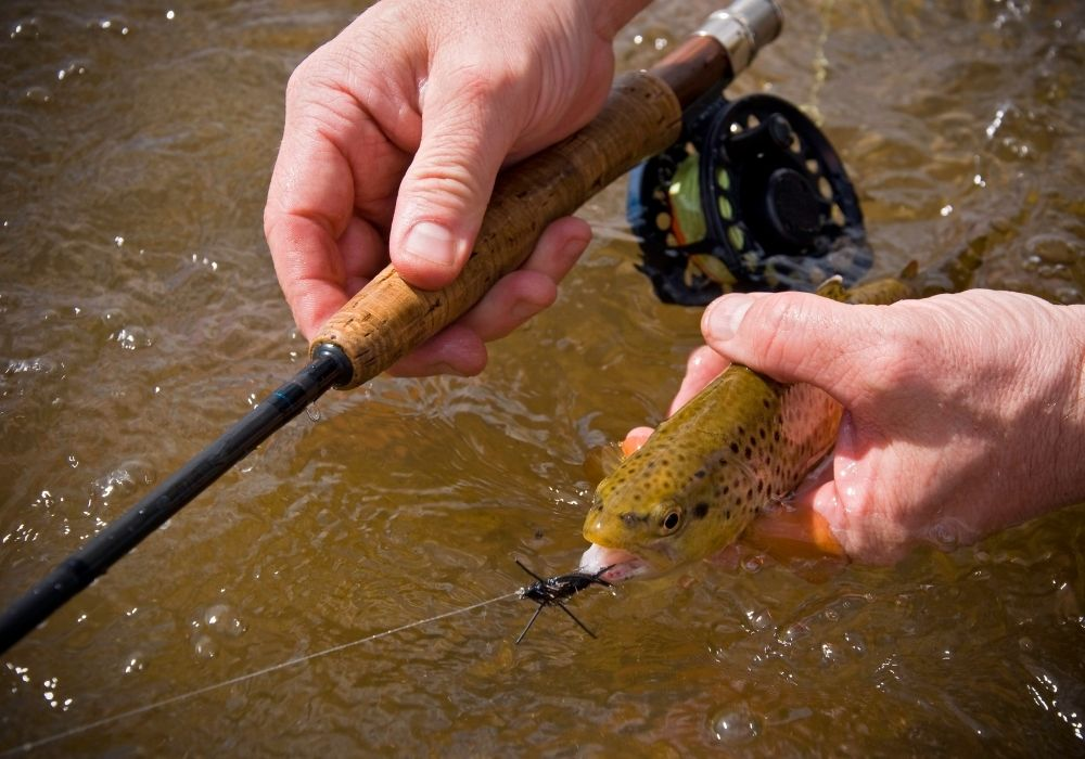 An angler fly fishing a bass using a stonefly flies in a river.