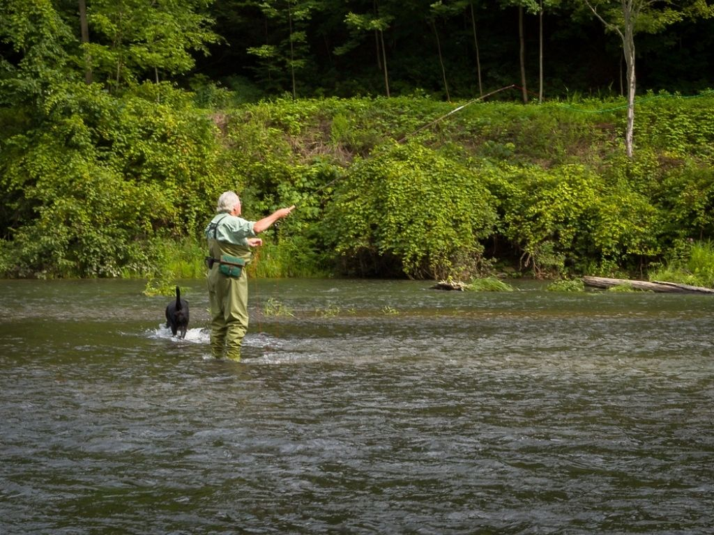 Mature Grey Hair Man Fly Fishing with black dog Pine Creek in Pennsylvania
