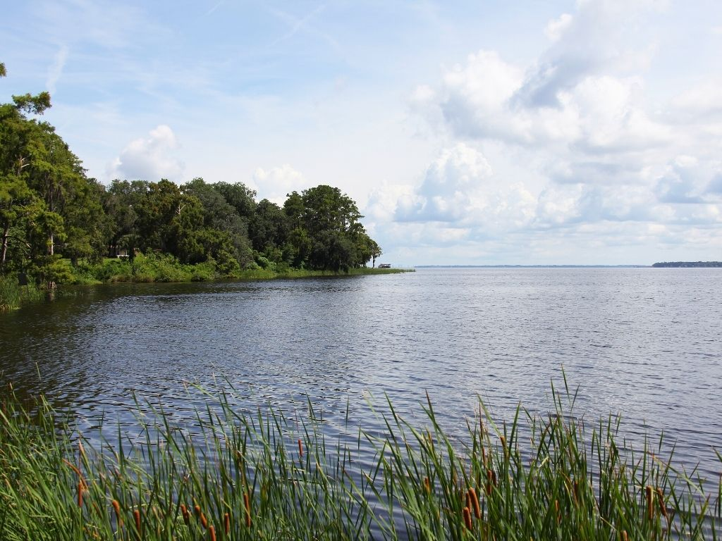 fly fishing St. Johns River in Florida