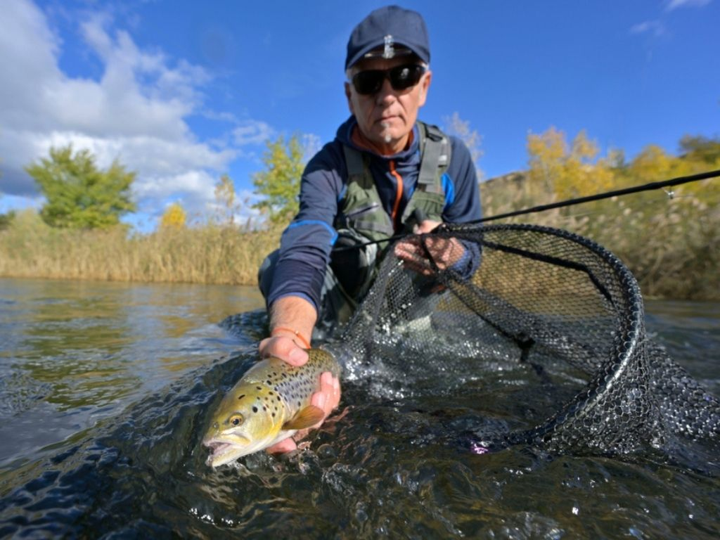 taking a big brown trout in the fly into a fish net