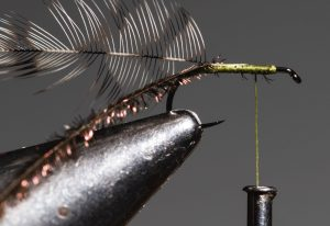 tying a Griffith's Gnat fly
