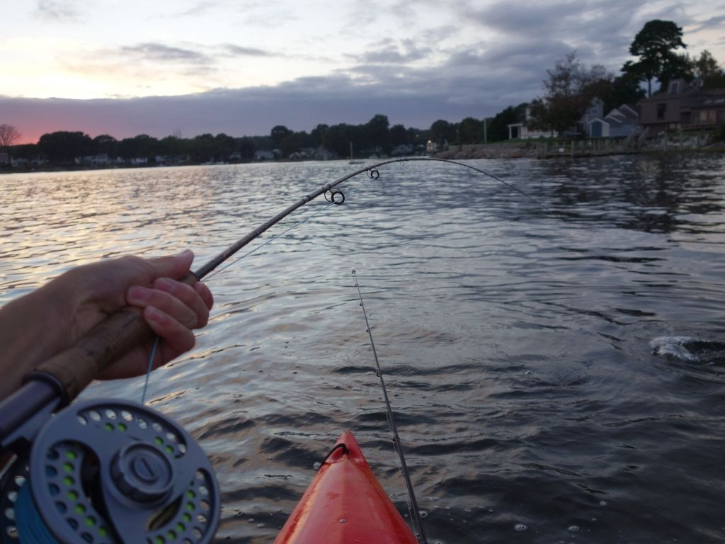 An angler fly fishing on a boat with a tfo pro II fly rod