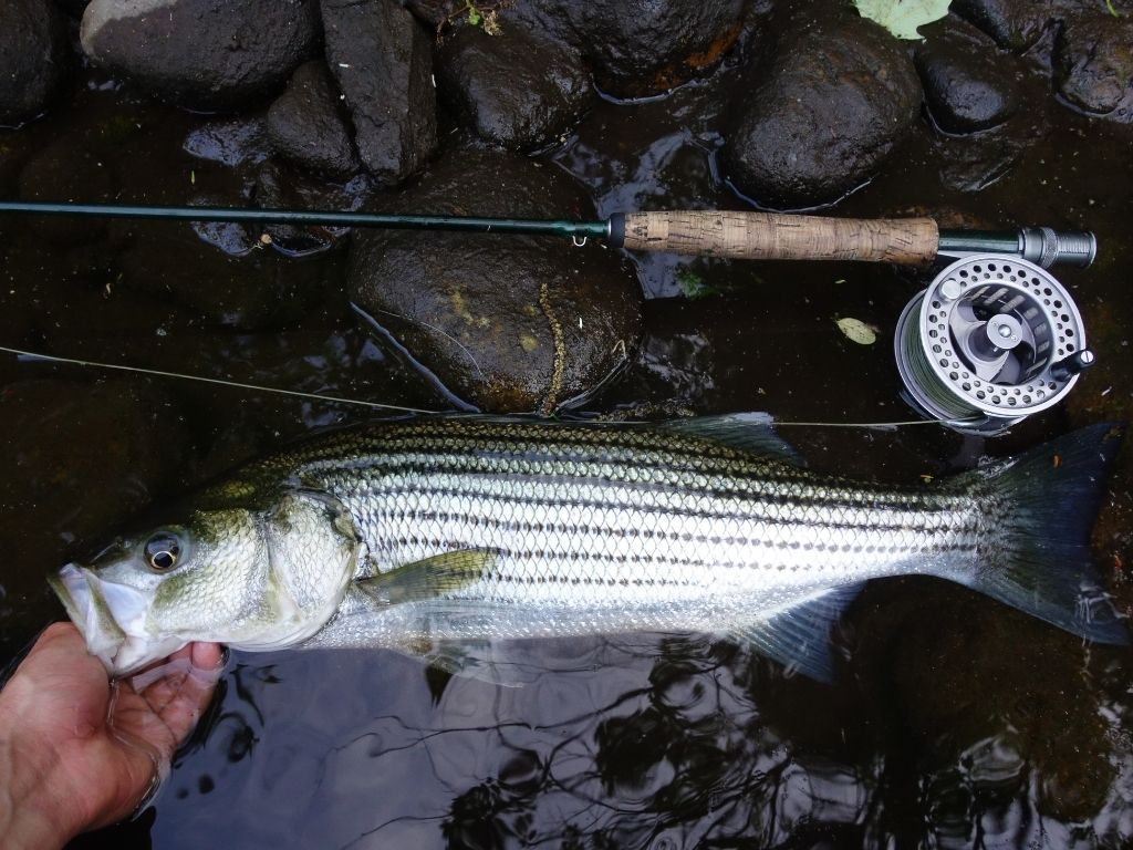 TFO Signature 2 fly rod