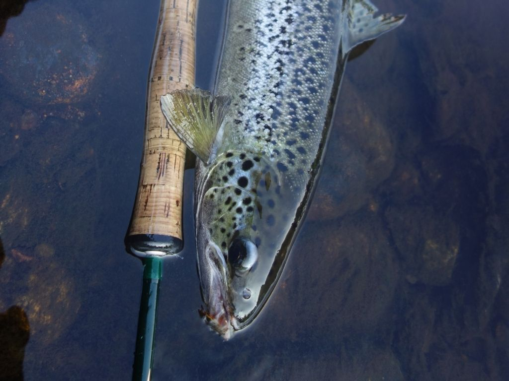 a TFO Signature 2 fly rod